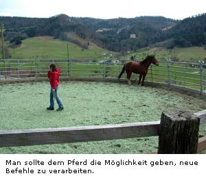 bild vom ersten pferd